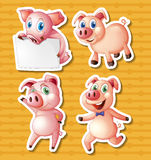 varkens Stock Foto