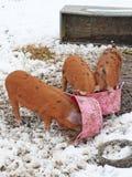 Varkens met hun snuiten in de Trog Royalty-vrije Stock Foto's