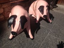 Varkens op Koninklijke Mijl Edinburgh stock afbeeldingen