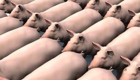 Varkens in rijen Royalty-vrije Stock Afbeeldingen
