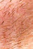 Varkenshaar op de baard van een mens stock afbeeldingen