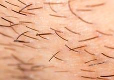 Varkenshaar op de baard van een mens royalty-vrije stock fotografie