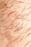 Varkenshaar op de baard van een mens stock foto's