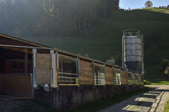 Varkenslandbouwbedrijf in zonsonderganglicht Royalty-vrije Stock Foto's