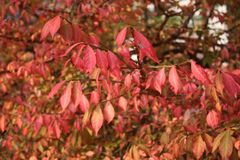 Varm Autumn Foliage trädblast Arkivbild
