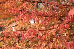 Varm Autumn Foliage trädblast Arkivfoton