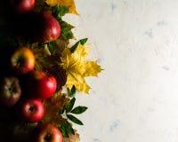 Varm bakgrund för höst av stupade gulingsidor och mogna röda äpplen Ram för text eller foto Tillämpbart för en artikel Royaltyfria Bilder