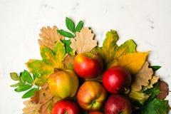 Varm bakgrund för höst av stupade gulingsidor och mogna röda äpplen Ram för text eller foto Tillämpbart för en artikel Arkivbild