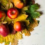 Varm bakgrund för höst av stupade gulingsidor och mogna röda äpplen Ram för text eller foto Tillämpbart för en artikel Royaltyfria Foton