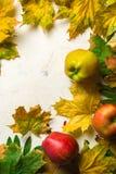 Varm bakgrund för höst av stupade gulingsidor och mogna röda äpplen Ram för text eller foto Tillämpbart för en artikel Royaltyfri Fotografi