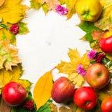 Varm bakgrund för höst av stupade gulingsidor och mogna röda äpplen Ram för text eller foto Tillämpbart för en artikel Royaltyfri Bild