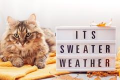 Varm dräkt för komfort för kallt väder Bekväm höst vinter royaltyfri fotografi