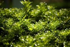 Varm grön morgon i Vung Tau Vietnam Arkivfoton
