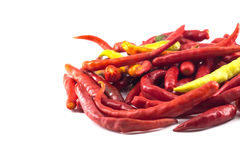 varm isolerad pepparred för chili Royaltyfri Bild