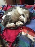 Varm kattunge Royaltyfri Bild
