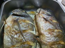 Varm lagad mat havsbraxen i ett silvermagasin Royaltyfri Fotografi