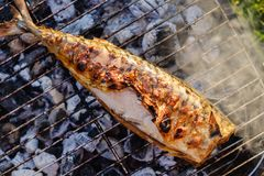Varm makrillfisk på en grilla panna, med örtkryddor på brand royaltyfria bilder