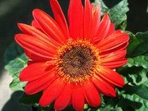 Varm mjuk vår för budRes-blomma royaltyfria bilder