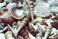 Varm mussla för sommarsolblått Royaltyfri Fotografi