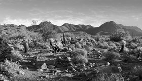 Varm och karg öken av Arizona, USA Royaltyfri Foto
