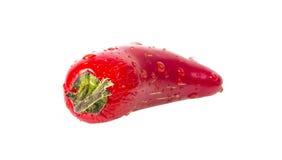 Varm peppar för våt röd Jalapeno arkivbild