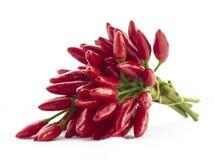 varm pepparred för chili Royaltyfri Foto