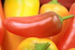 varm pepparred för chili Arkivfoton