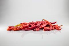 varm pepparred för chili Arkivfoto