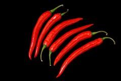 varm pepparred för chili Royaltyfri Bild