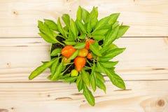 Varm röd orange chilipeppar på naturligt trä royaltyfria foton