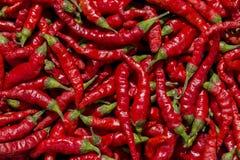 Varm röd pepparbakgrund Royaltyfria Bilder