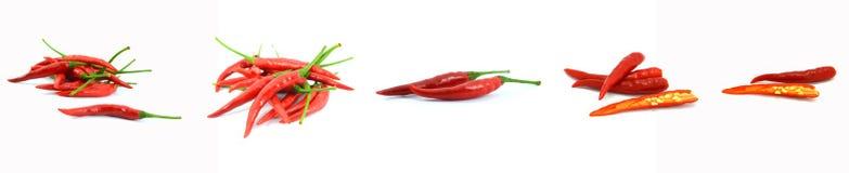 varm red för chili Arkivfoton