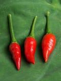 varm red för chilies Fotografering för Bildbyråer