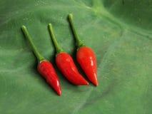 varm red för chilies Arkivfoto