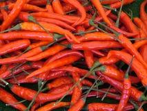 varm red för chilir Arkivfoto