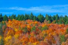 Varm skog Arkivbild