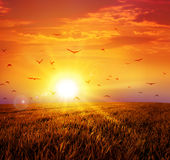 Varm solnedgång på den lösa ängen Vektor Illustrationer
