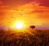 Varm solnedgång på den lösa ängen Royaltyfri Illustrationer
