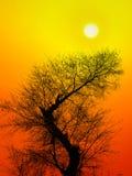 varm sommar för eftermiddag Arkivfoton