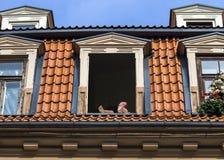 Varm sommardag i mitt av gamla Riga, Lettland, Europa Royaltyfria Foton