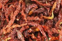 Varm torr chili Arkivbild