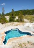 Varm vår för blå stjärna på den Yellowstone nationalparken arkivbilder