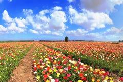 Varma April i de varma söderna Royaltyfria Bilder