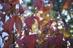 Varma Autumn Foliage lämnar n-material 2 Royaltyfria Bilder