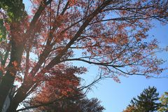 Varma Autumn Foliage New England Royaltyfri Bild