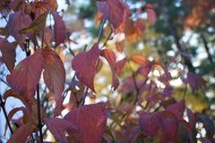 Varma Autumn Foliage New England Leaves Royaltyfri Fotografi