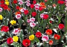Varma blommor för vårfröjd Royaltyfri Foto