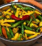 Varma chilies stänger sig upp Fotografering för Bildbyråer