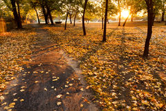 Varma gula höstsidor fodrar en parkerabana på soluppgång Royaltyfri Foto