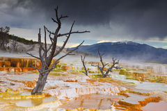 varma huvudkolossala fjädrar terrasserar yellowstone fotografering för bildbyråer
